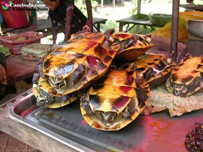 Click image for larger version  Name:Real Turtle.jpg Views:1111 Size:49.9 KB ID:4336