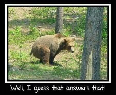 Click image for larger version  Name:Bear.jpg Views:87 Size:38.7 KB ID:4361
